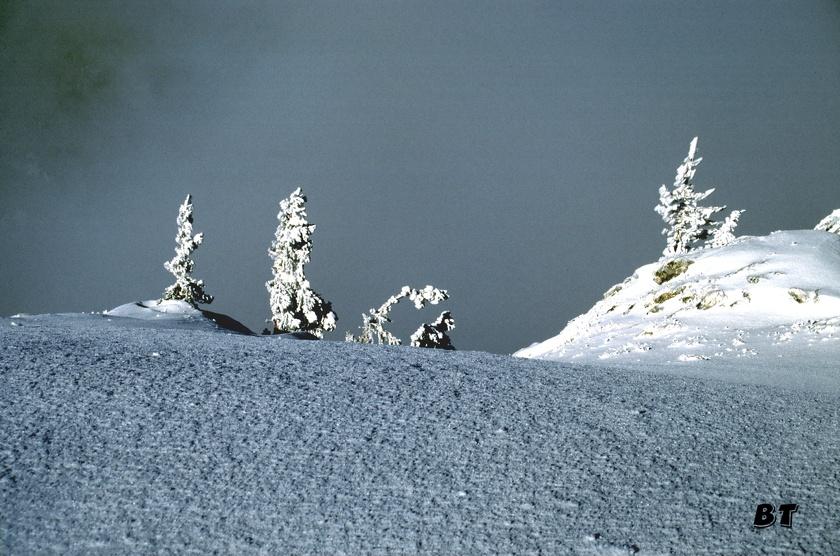 L'hiver en Chartreuse : féérique.